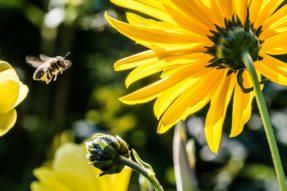 蜜蜂的教诲