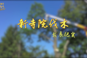 [视频]新寺院伐木——发展纪实