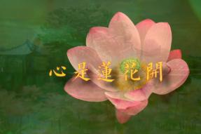 [舞蹈]心是莲花开