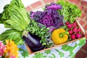 超级实用!教您怎样选择新鲜蔬菜