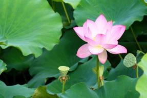 佛教与贞观之治